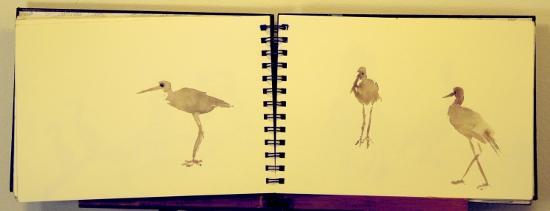 shorebirds_SKETCH-T.H.Pickett